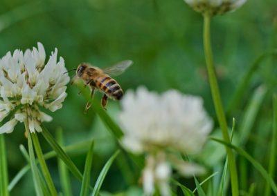 Bee Storage 2